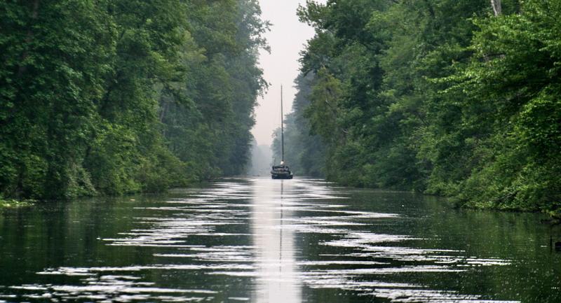 dismal_swamp1.jpg